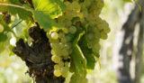 ワインは大人の男の嗜み~ブルゴーニュワイン通への道~第3回 ルー・デュモン