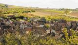 ワインは大人の男の嗜み ~ブルゴーニュワイン通への道~ 第2回 オーディフレッド