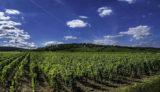 ワインは大人の男の嗜み~ブルゴーニュワイン通への道~第5回 アンリ・マニャン ジュヴレ・シャンベルタン プルミエ・クリュ レ・カズティエ